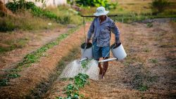 Produsele agro-industriale moldovenești, promovate în Coreea de Sud. Ce planuri au autoritățile