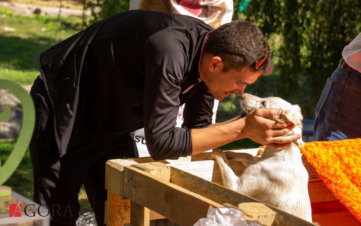 15.09.2019 Festivalul animalelor fără adăpost