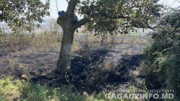 Incendiu de vegetație în sudul țării. Traficul rutier din apropierea municipiului Comrat a fost suspendat temporar