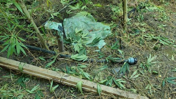 Cultiva cânepă în seră. Un bărbat a ajuns pe mâna oamenilor legii