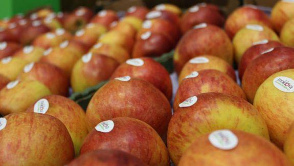"""Agricultorii moldoveni încearcă noi piețe de desfacere. """"Produsele calitative mereu se vând și o să se vândă"""" (VIDEO)"""