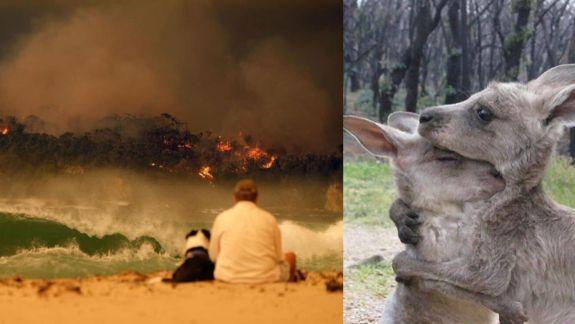 Imaginile virale din Australia, între fake și realitate. Căror fotografii să nu le dai crezare (FOTO)