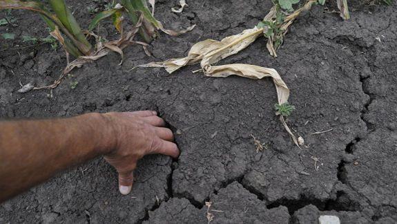 O treime din toate perioadele de secetă din R. Moldova, în ultimii 75 de ani, s-au întâmplat după anul 2000. Ce au de gând să facă autoritățile