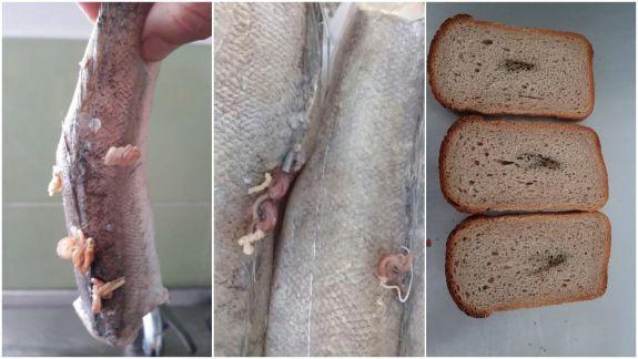 Pește cu viermi și pâine cu metal la o grădiniță din Capitală. Președinția, sesizată de fosta directoare