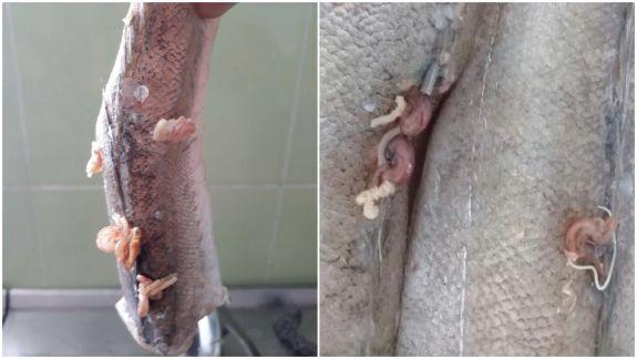 Scandalul peștelui cu viermi din grădinițe continuă. Ion Chicu postează noi fotografii: Nu e singurul caz