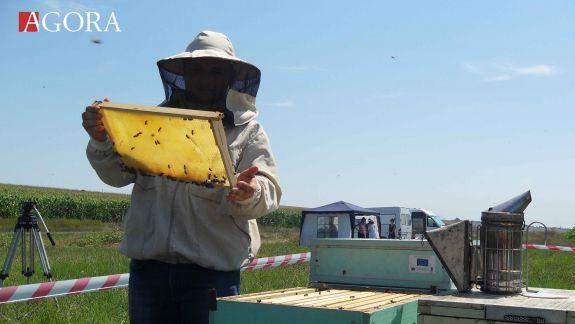 Apicultura 2.0 la Căușeni: Tehnologii inovative de producere a stupilor și o productivitate sporită a albinelor