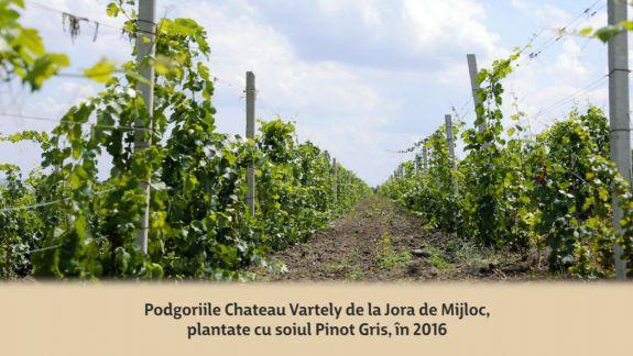 VIDEO. Producătorii de vin au spart gheața! Află care este procedura și costurile de înregistrare a IGP, DOP și STG